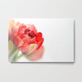 Peony Tulip... Metal Print