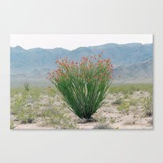 Ocotillo Plant (Anza Borrego Desert, California) Canvas Print