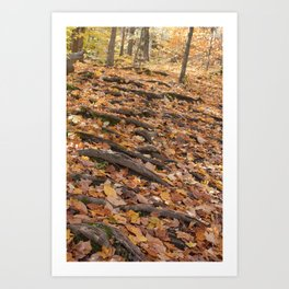 Forest Stairs Art Print