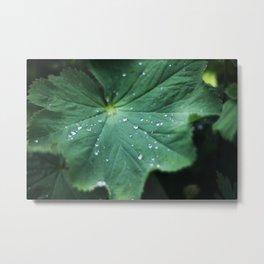 Leaf Drops Metal Print