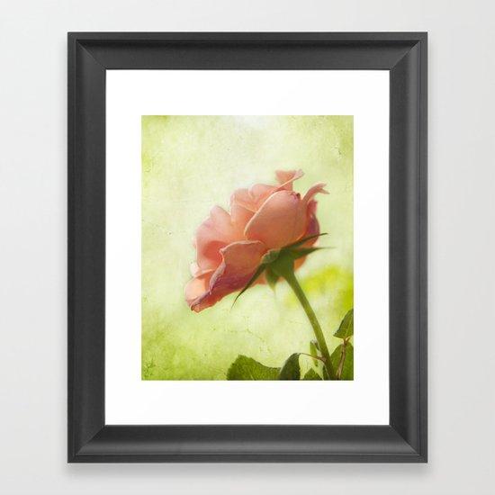 Vintage light pink rose Framed Art Print