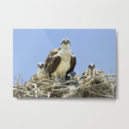 Osprey Family Portrait Metal Print