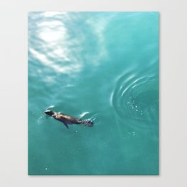 Sea Pup Canvas Print