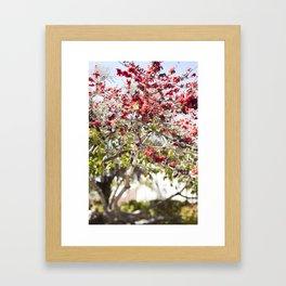 Red Cotton Tree Framed Art Print