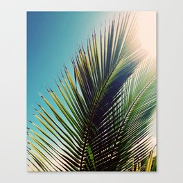 Sunny Palm Tree Canvas Print