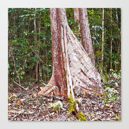 Buttress root in the rainforest Canvas Print