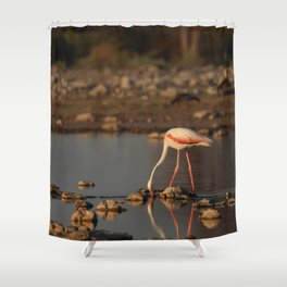 Birds of Namibia 3 Shower Curtain