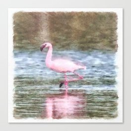 Lesser Flamingo Watercolor Canvas Print