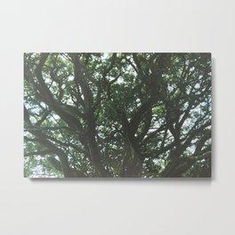 Oak tree #1 Metal Print