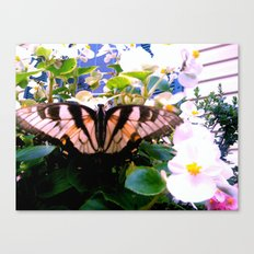 Summer;flies Canvas Print