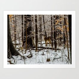 Deer in the Glistening Forest by Teresa Thompson Art Print