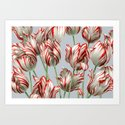 Semper Augustus Tulips by ikerpazstudio