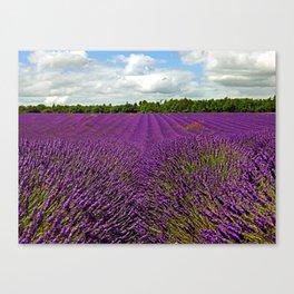 Lavender Landscape (Version 1)  Canvas Print
