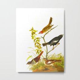 Lark Finch, Prairie Finch, Brown Song Sparrow Metal Print