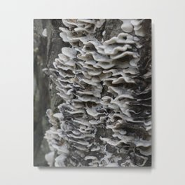 #forest Metal Print