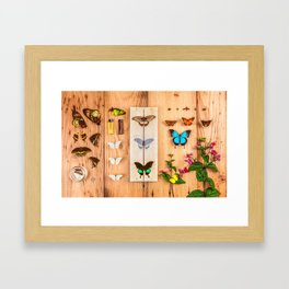 Butterfly Collector Framed Art Print