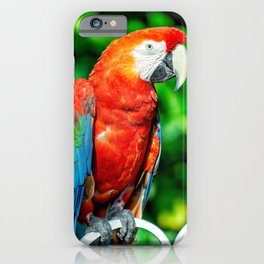 Macaw1 iPhone Case