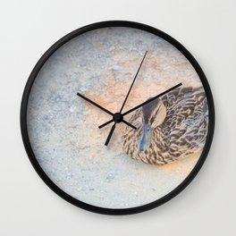 Mallard Duck resting Wall Clock