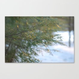 hemlock in a golden winter Canvas Print