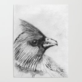Cardinal Drypoint Poster