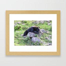 Contemplative Black Bear Framed Art Print