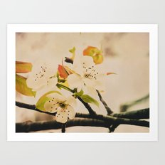 Spring Botanical -- Pear Tree in Flower Art Print