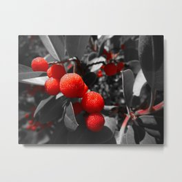 Red Beauty of Madrone Metal Print