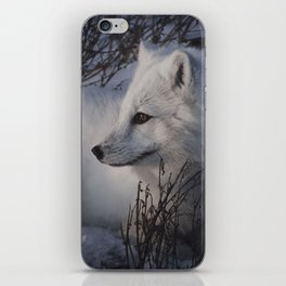 Arctic Fox iPhone Skin