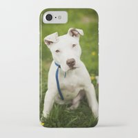 pit bull iPhone & iPod Cases featuring Pit Bull Puppy by Kaelyn Ryan Photography