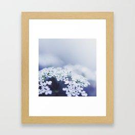 lavendel III Framed Art Print