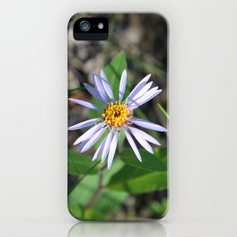 Arctic Aster in the Summertime iPhone Case