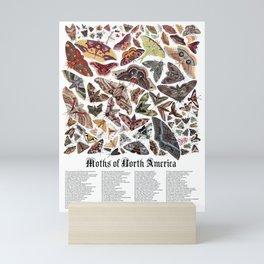 Moths of North America Mini Art Print