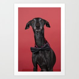 A brown Italian greyhound dog with a bowtie against a red background Art Print