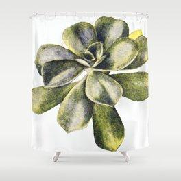 Vintage Succulent Watercolor Shower Curtain
