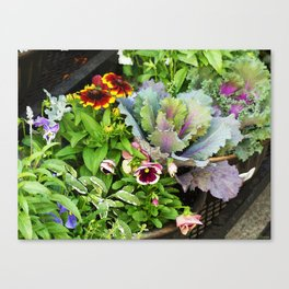 Potted Fall Flowers Canvas Print