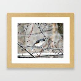 Titmouse in the Snow Framed Art Print