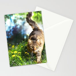Tabby Cat Stalking Stationery Cards