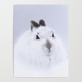 White mountain hare on white snow Poster