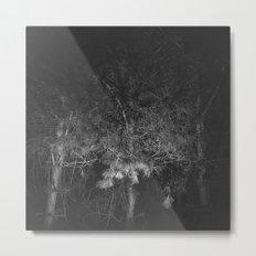 Black Pine Wood Metal Print