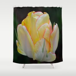 Red-Tipped Tulip by Teresa Thompson Shower Curtain