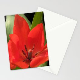 flowers of spring on black -72- Stationery Cards