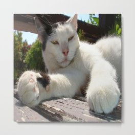 Black and White Bicolor Cat Lounging on A Park Bench Metal Print
