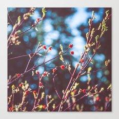 Berries at the Lake  Canvas Print