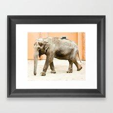 Smiling Elephant Framed Art Print