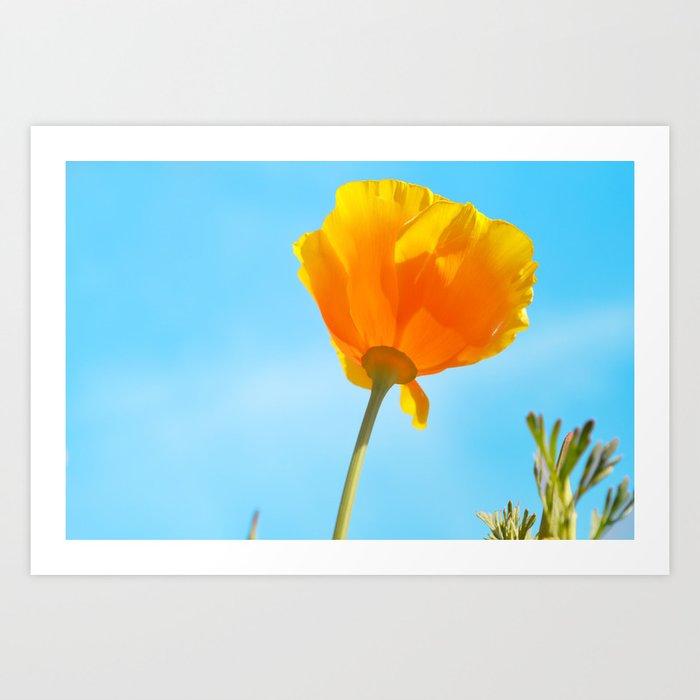California golden poppy art print by heatherboye society6 california golden poppy art print mightylinksfo