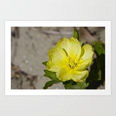 Beach Flower Art Print