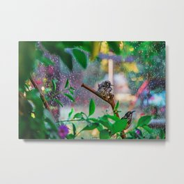 Silly New Holland Honeyeater Sprinkler Bonanza | Water Colour Edition Metal Print