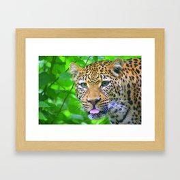 The Leopard's Tongue Framed Art Print