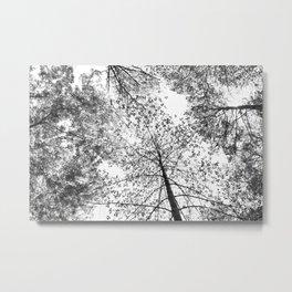 overhead, black and white Metal Print