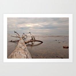 Dead Tree Bay Art Print